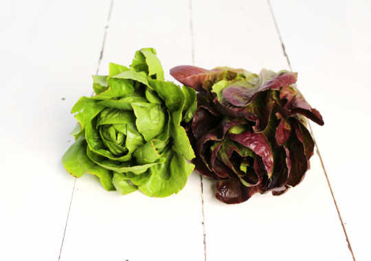 Lettuce (Romaine, Red/Green, Mini, 2ct)