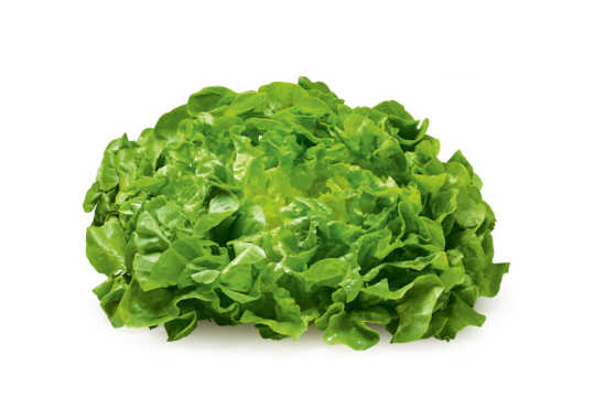 Lettuce (Green/Red Oak Leaf, sml)