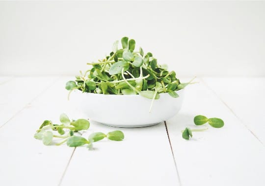 Microgreens (Sunflower Shoots, 75g)
