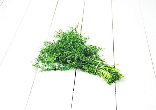 Herb, Dill